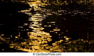 Large drops of rain drip onto the shiny surface of the water. Shot in a dark studio with yellow neon lighting effects. Slow motion. Close up.