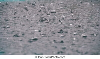 Large Drops of Rain Fall in a Puddle During a Rainstorm....