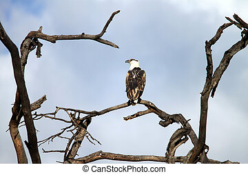 eagle sitting on a tree branch