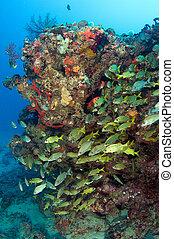 Large Fish Aggregation under a reef ledge.