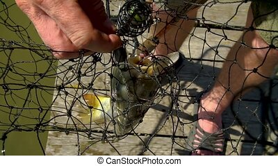 Large fish caught on fishing tackle. Fishing Hook From The Mouth Of A Caught Fish.