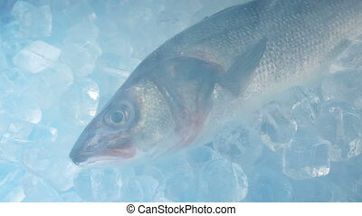 Large Fish Frozen With Icy Vapor - Raw fish with chilled air...