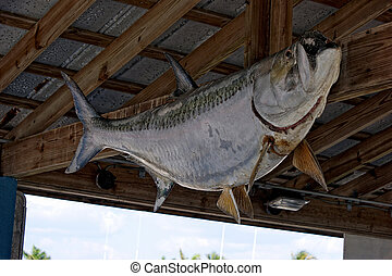A large stuffed bass fish is nailed to the rafters of an open marina building.