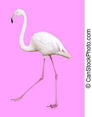 Large Flamingo isolated on pink background