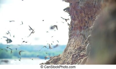 Large flock of birds flying on the cliff in summer day over the river