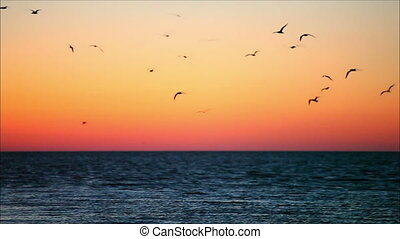 large flock of birds in the evening 10