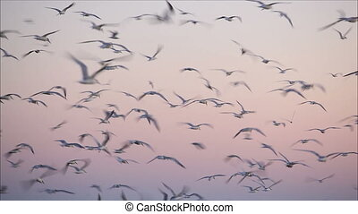 large flock of birds in the evening 2