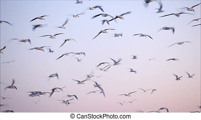 large flock of birds in the evening 6