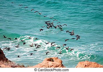 cormorant - Large flock of cormorant above the sea