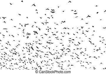 large flock of crows