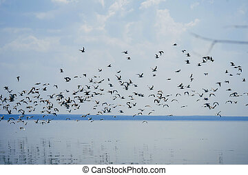 flock of seagulls flies over the sea on background of blue sky