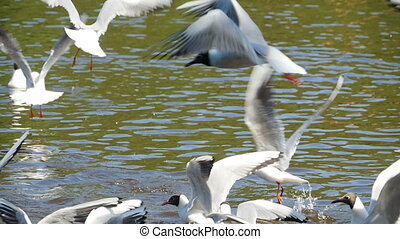 flock of seagulls fly