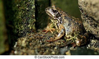 Large forest toad sits motionless, hunting time, close to