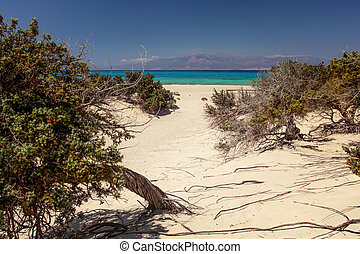 Large-fruited juniper (Juniperus macrocarpa) trees  on sandy beach with sea in distance. Chrissi island, Ierapetra, Greece