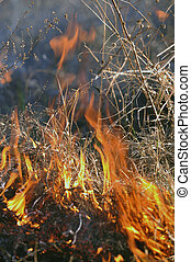 large grass fire3 - large grass fire in a low settlement