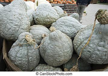 large gray pumpkins