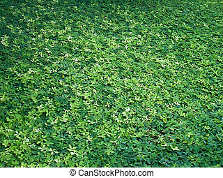 Large green leaves on the ground