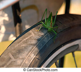 large green locust sits on a Bicycle wheel, locust sits on a Bicycle tire