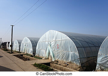 Large greenhouse for plants in the autumn