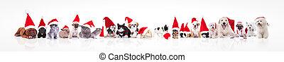 large group of animals waring santa claus hat