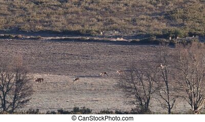 Large group of deers walking in a row - Long shot of large ...