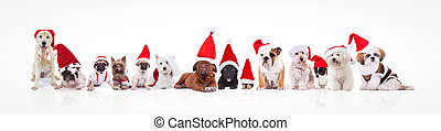 large group of dogs wearing santa claus hats and costumes