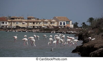 Large group of flamingos near the city - Large group of ...