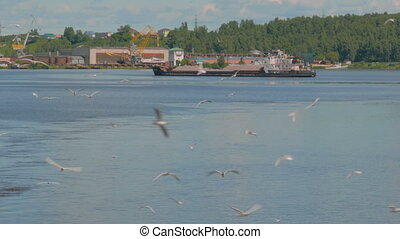 Large group of seagulls fly over river. Nature concept
