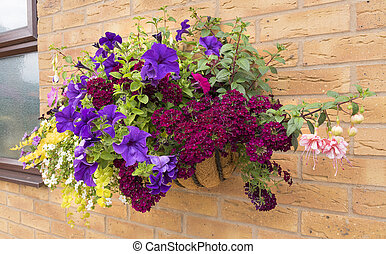 Large hanging basket of flowers with a wide range of colors for the summer.