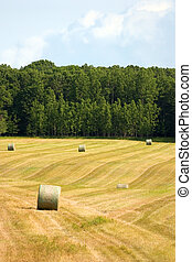 Large Hay Bales - a rolling field with large round bales of...