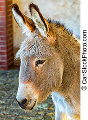 Large head of a donkey