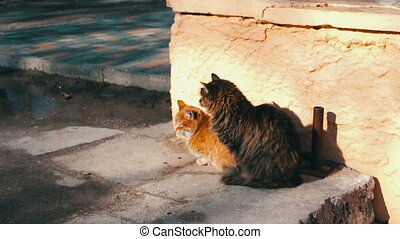 Large homeless cat stretches and yawns at the winter street