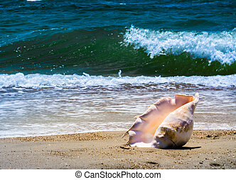 large huge oceanic shell on the yellow sand against a white foam of the surf and the blue sea