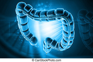 Large intestine - Digital illustration of large intestine in...