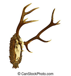 large isolated  red deer hunting trophy