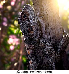 Large Lizard Hardun on a Tree