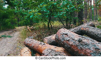 Large logs felled in the forest on the ground. The problem...