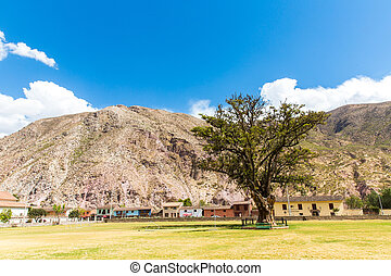 Large lonely tree in South America, PERU against blue sky on a sunny day