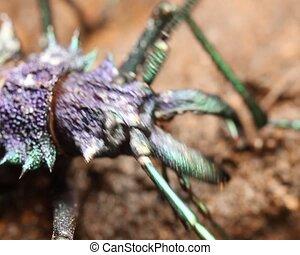 Large longhorn beetle (Cerambycidae