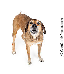 Large Mixed Breed Dog Standing While Howling