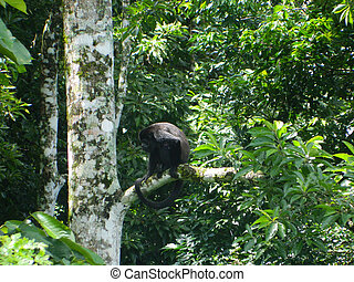Large Monkey in a Tree - This is a photo of a large monkey...