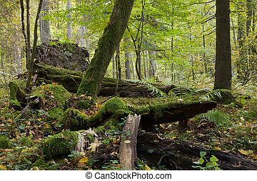 Large moss wrapped tree lying