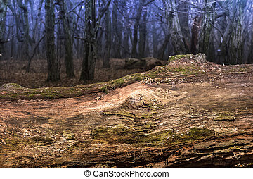 Large moss wrapped tree lying, deciduous forest