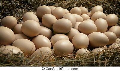 Large Nest With Many Eggs - Tracking shot moving slowly past...