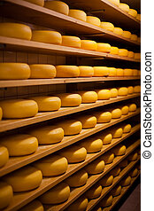 Large number of cheese-wheels aging on shelves at the cellar...