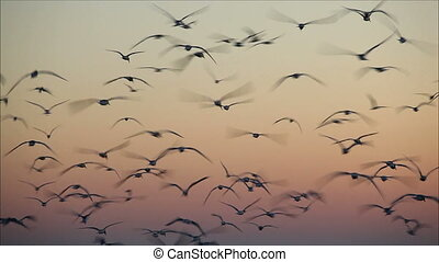 large number of gulls flying against the evening sky 1