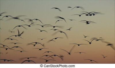 large number of gulls flying against the evening sky