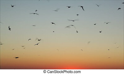 large number of gulls flying against the evening sky 2