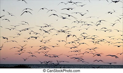 large number of gulls flying against the evening sky 6