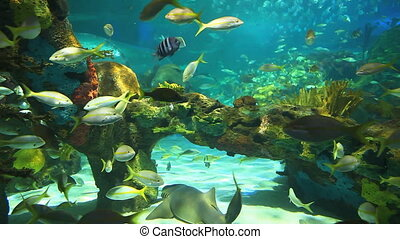 Large numbers of tropical fish - Colorful coral encrusted...
